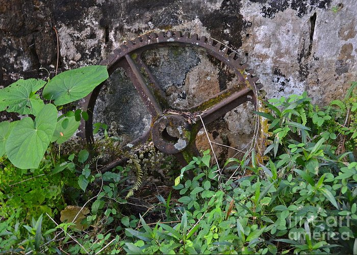 Jamaica Greeting Card featuring the photograph Old Gear by Carol Bradley