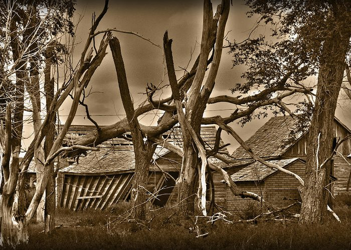 Old Greeting Card featuring the photograph Old Homestead by Shane Bechler
