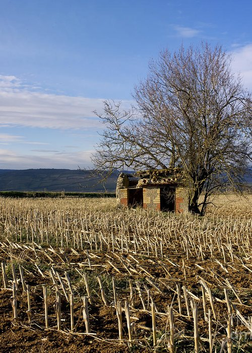 Zea Greeting Card featuring the photograph Old Hut Isolated In A Field. Auvergne. France by Bernard Jaubert