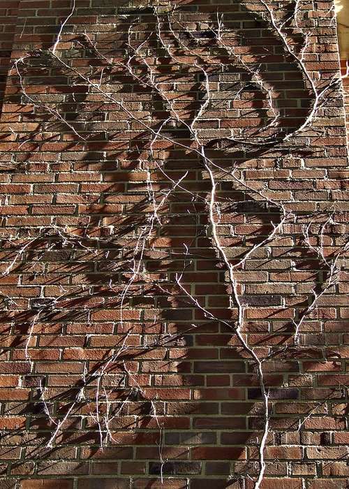 Facades Greeting Card featuring the photograph Old Ivy by Richard Gregurich