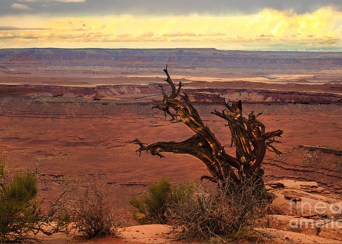 Canyonland Greeting Card featuring the photograph Old One by Robert Bales