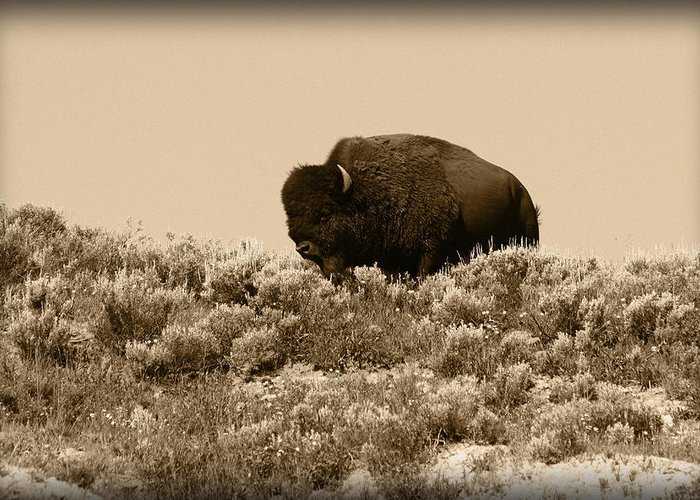 Buffalo Greeting Card featuring the photograph Old Timer by Shane Bechler