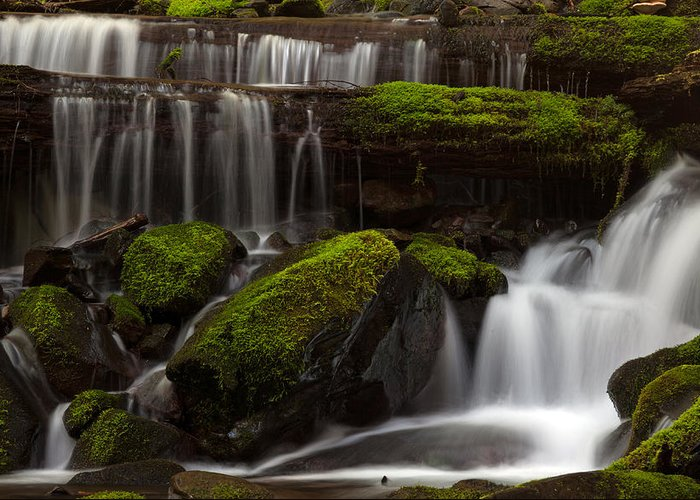 Olympic National Park Greeting Card featuring the photograph Olympics Gentle Stream by Mike Reid