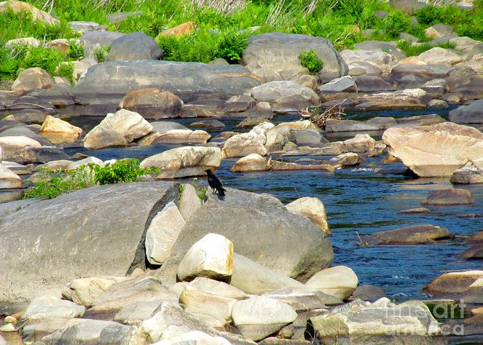Reflection Greeting Card featuring the photograph On The Rock by Randi Shenkman