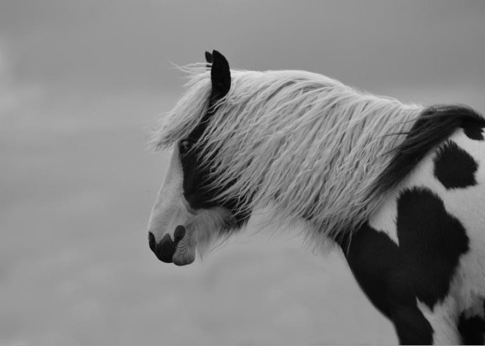 Horse Greeting Card featuring the photograph Only The Wind Spoke Of Softness by Studio Yuki