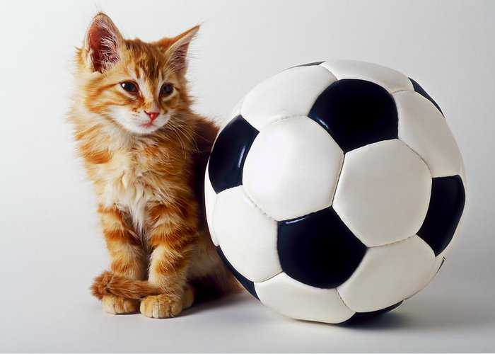 Cat Greeting Card featuring the photograph Orange And White Kitten With Soccor Ball by Garry Gay