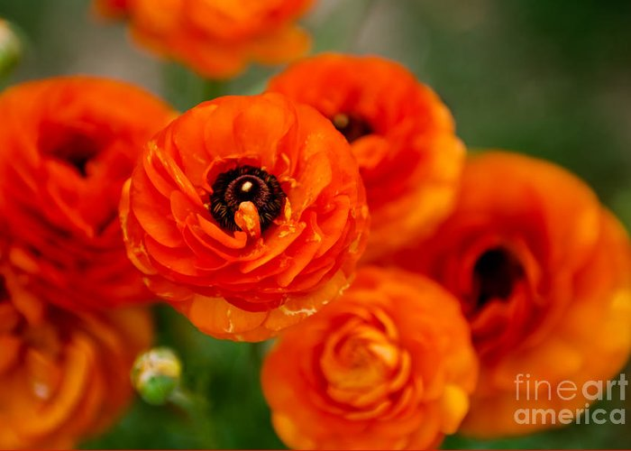 Flower Greeting Card featuring the photograph Orange Bulbs by Syed Aqueel