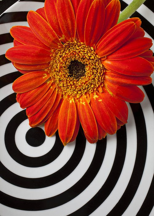 Orange Gerbera Greeting Card featuring the photograph Orange Mum With Circles by Garry Gay