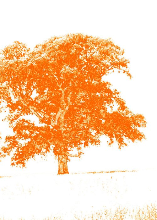 Art Greeting Card featuring the photograph Orange Oak by Alan Look
