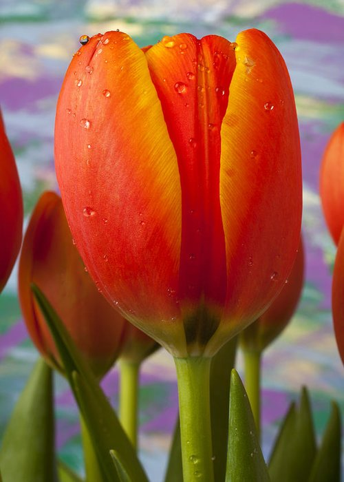 Orange Yellow Tulip Greeting Card featuring the photograph Orange Tulip Close Up by Garry Gay