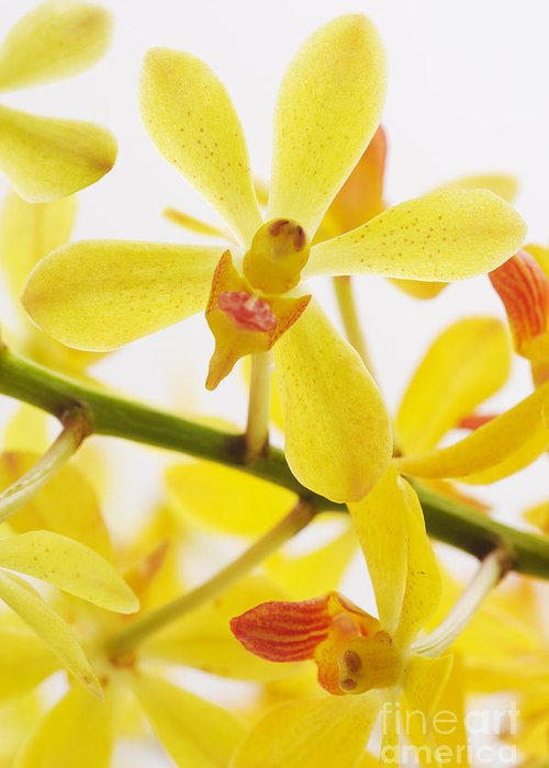 Spa-treatment Greeting Card featuring the photograph Orchid by Atiketta Sangasaeng