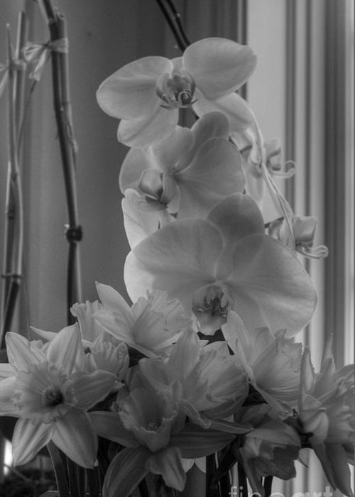 Orchids Greeting Card featuring the photograph Orchids 2 by David Bearden