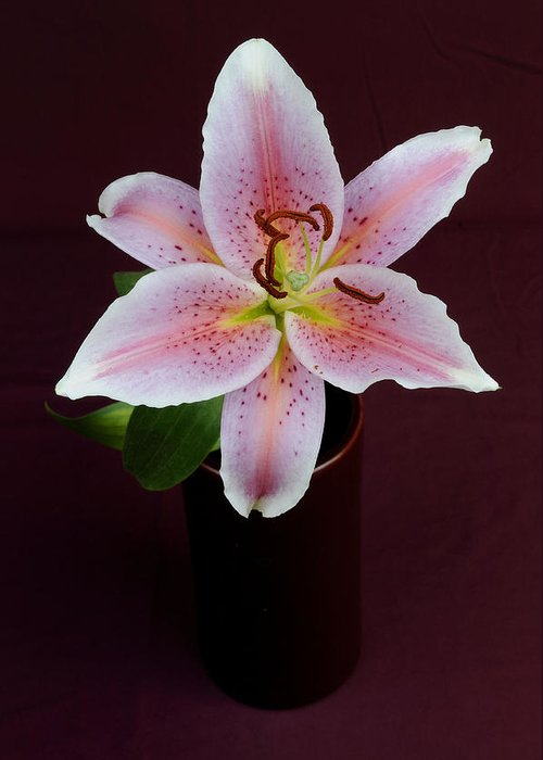 Flower Greeting Card featuring the photograph Oriental Lilly by David Van Zet