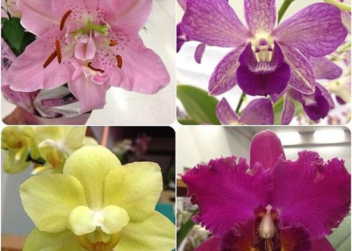 Orchids Greeting Cards