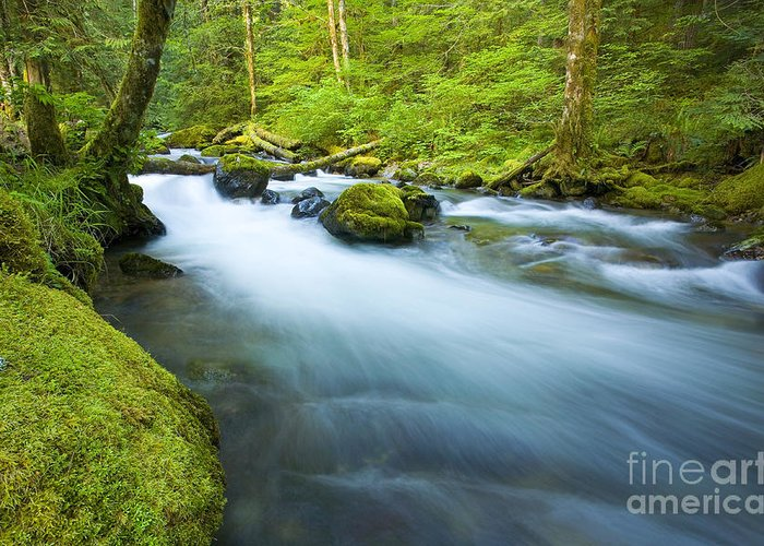 Skate Creek Greeting Card featuring the photograph Out Of The Rainforest by Mike Dawson