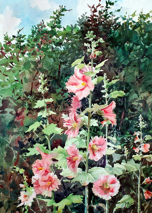 Peter Sit Watercolor Greeting Card featuring the painting Oxenden Hollyhock by Peter Sit