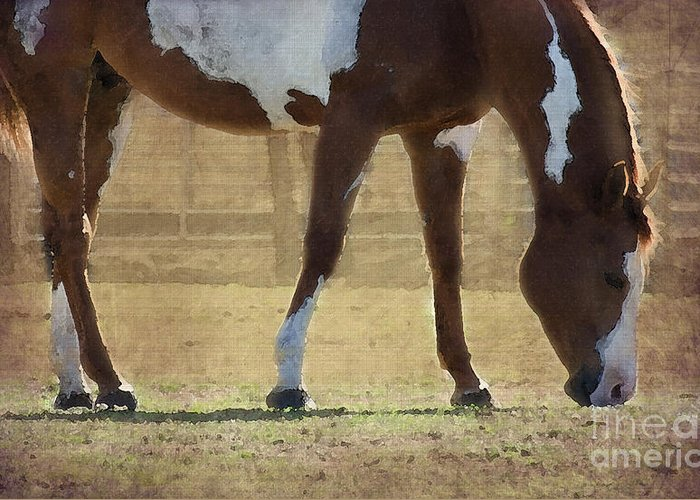 Horse Greeting Card featuring the photograph Paint Horse by Betty LaRue