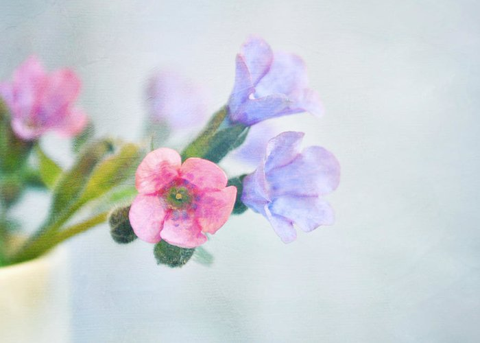 Flowers Greeting Card featuring the photograph Pale Pink And Purple Pulmonaria Flowers by Lyn Randle