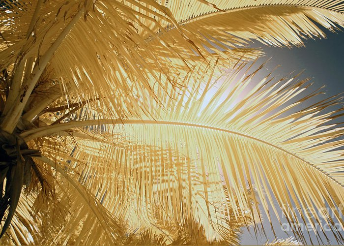 Infrared Photography Greeting Card featuring the photograph Palm Leaf by Keith Kapple