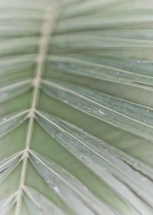 Kauai Greeting Card featuring the photograph Palm Leaf by Lannie Boesiger