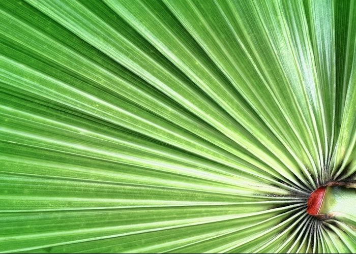 Green Greeting Card featuring the photograph Palm Leaf by Rudy Umans