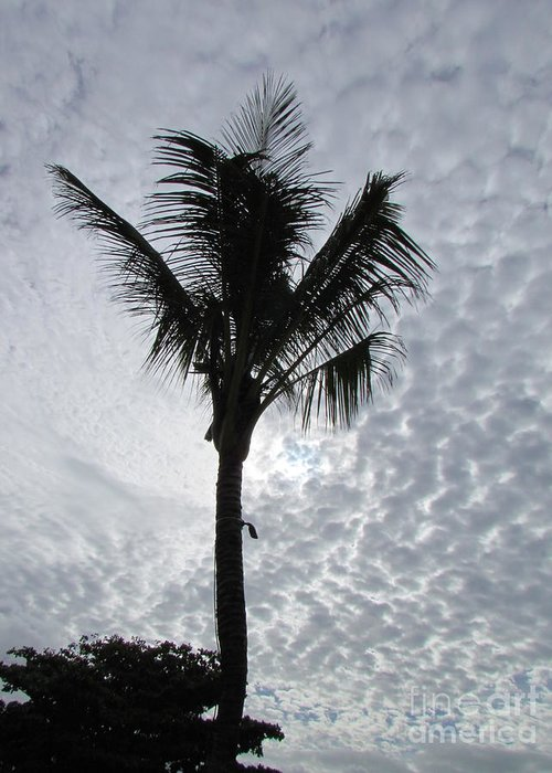 Palm Shadow With Beautiful Clouds Greeting Card featuring the photograph Palm Shadow by Rajesh Nagalingum Vythilingum