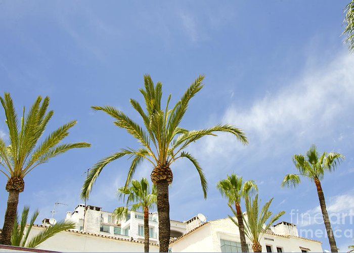 Palm Tree Greeting Card featuring the photograph Palm Trees In The Blue by Perry Van Munster
