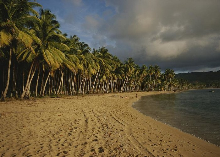 Atlantic Islands Greeting Card featuring the photograph Palm Trees Line A Dominican Republic by Raul Touzon