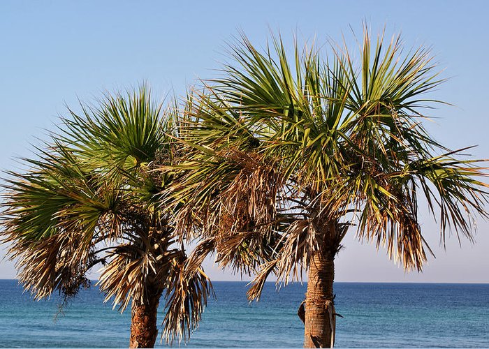 Trees Greeting Card featuring the photograph Palm Trees by Sandy Keeton