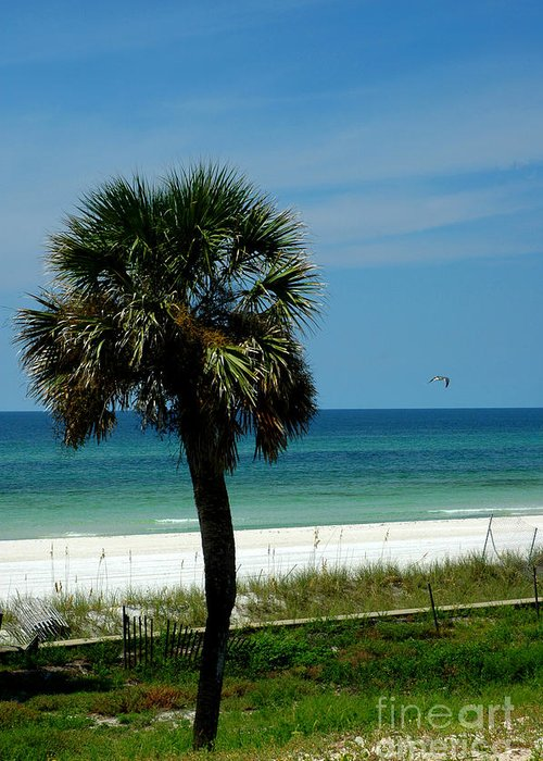 Palm Tree Greeting Card featuring the photograph Palmetto And The Beach by Susanne Van Hulst