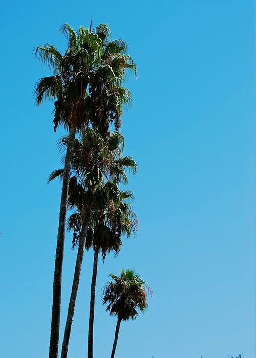 California Greeting Card featuring the photograph Palms Over Oak by Eric Tressler