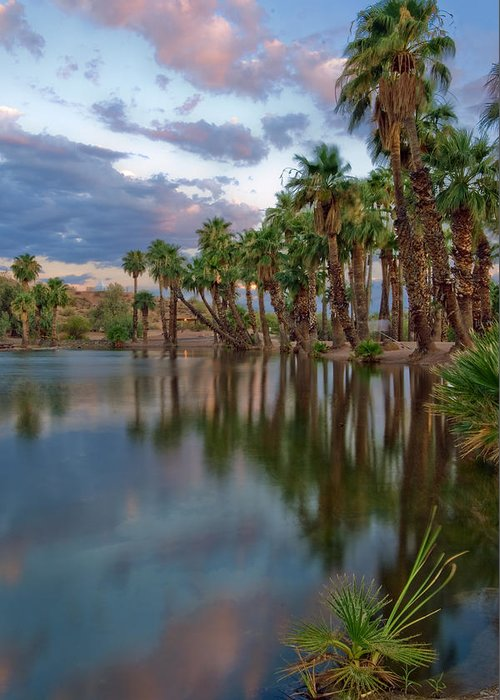 Abstract Greeting Card featuring the photograph Palms Trees Over Papago Lake by Dave Dilli