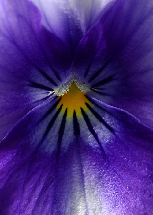 Pansies Greeting Card featuring the photograph Pansy Abstract by Lisa Phillips