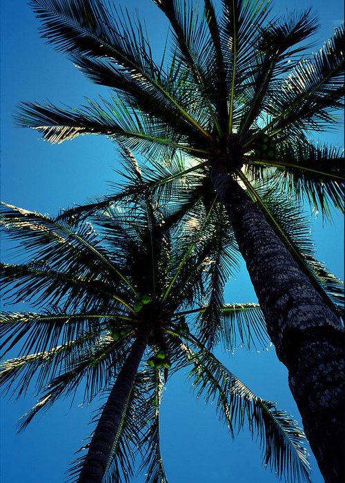 Palm Trees Greeting Card featuring the photograph Paradise Island by Mike Flynn