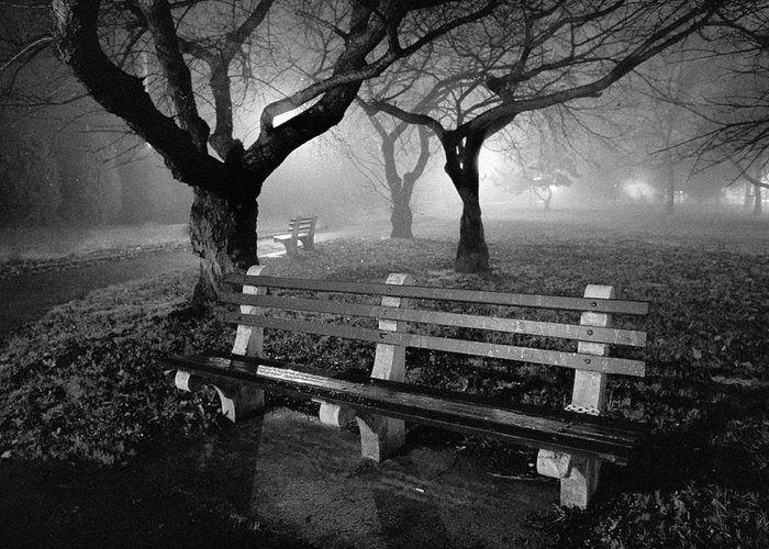 Foggy Greeting Card featuring the photograph Park Benches by Gary Heller