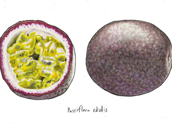Passionfruit Greeting Card featuring the drawing Passiflora Edulis Fruit by Steve Asbell