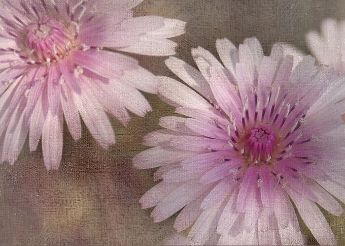 Pink Greeting Card featuring the photograph Pastel Pink Passion by Benanne Stiens