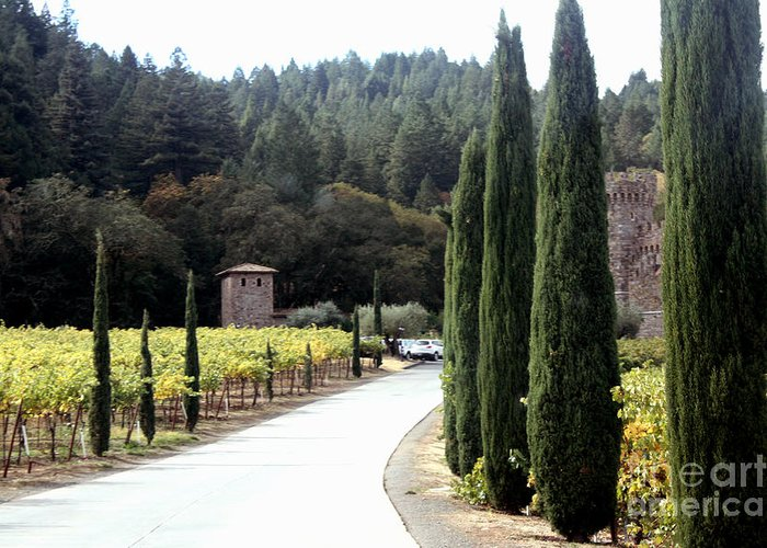 Napa Valley Greeting Card featuring the photograph Path To Amerosa by Gail Salituri