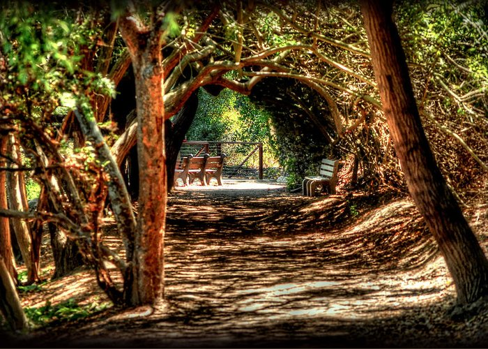 Forrest Greeting Card featuring the photograph Pathway by Ryan Incardone