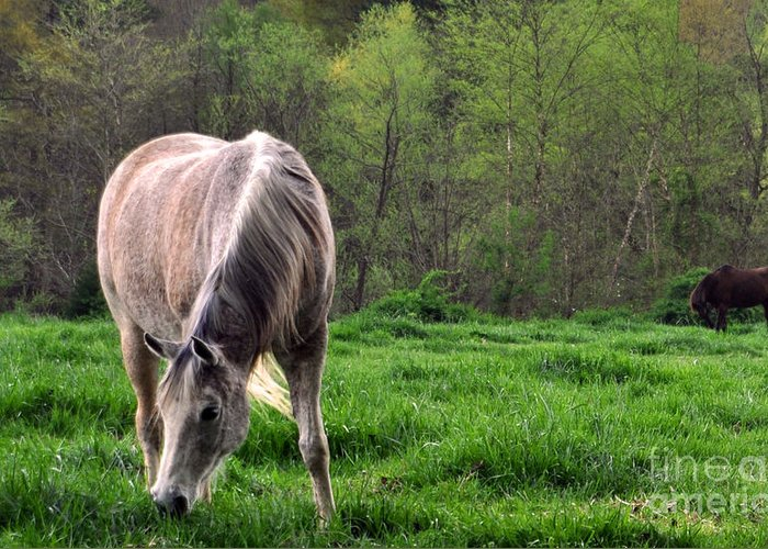 Horses Greeting Card featuring the photograph Peaceful Pasture by Lydia Holly