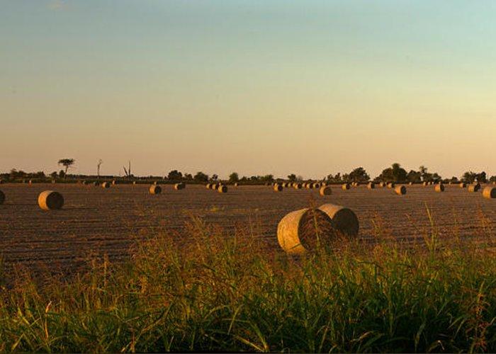 Peanut Greeting Card featuring the photograph Peanut Field Bales At Dawn 1 by Douglas Barnett