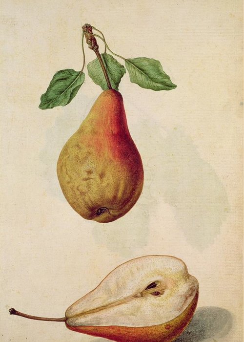 Still-life Greeting Card featuring the painting Pear  Pyrus Communis by J le Moyne de Morgues