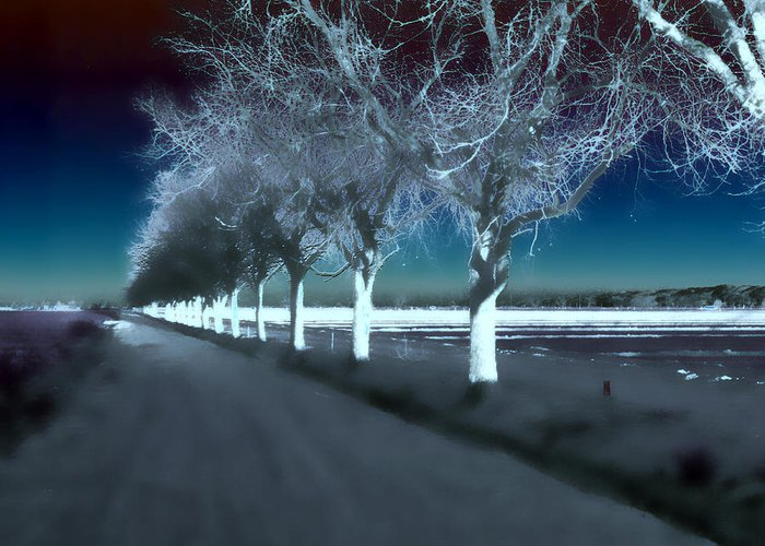 Trees Greeting Card featuring the photograph Pecan Trees by Jim Painter
