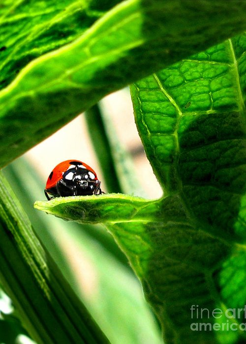 Ladybug Greeting Card featuring the photograph Peek A Boo by Jennie Breeze