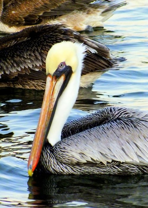 Birds Greeting Card featuring the photograph Pelican Pete by Karen Wiles