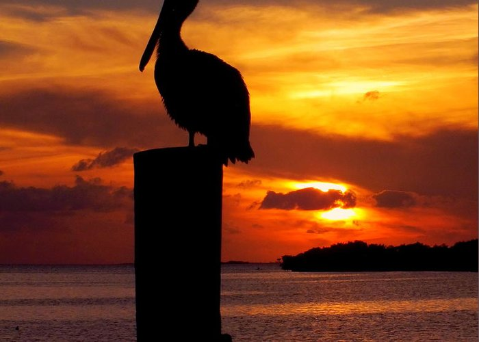 Sunsets Greeting Card featuring the photograph Pelican Sundown by Karen Wiles