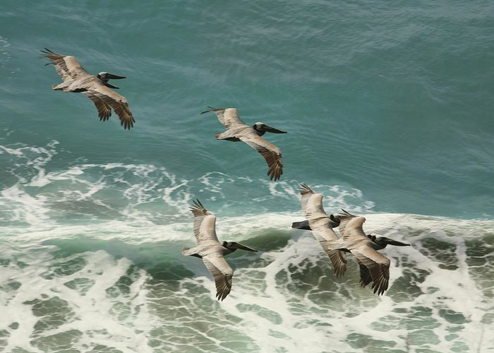 Highway 1 Greeting Card featuring the photograph Pelicans In Flight Over Surf by Gregory Scott
