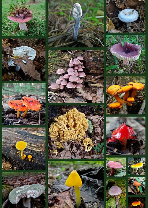 Mushrooms Greeting Card featuring the photograph Pennsylvania Mushrooms Collage 2 by Mother Nature