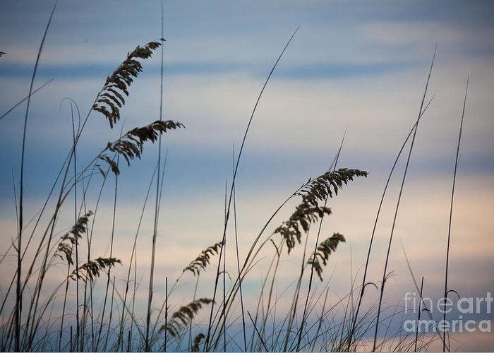 Gulf Coast Greeting Card featuring the photograph Pensacola Beach Sea Oats by Steven Gray