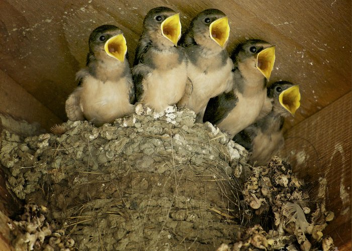 Mud Swallows Greeting Card featuring the photograph Pick Me by Diane Smith